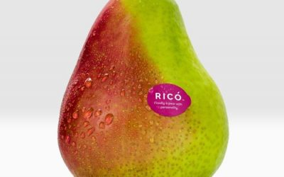 Louise Wood of Freshmax on the Rico Pear